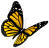 pugsoft_butterfly